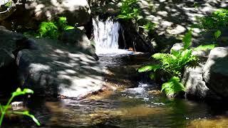 Расслабляющая музыка со звуками живой природы и маленького водопада