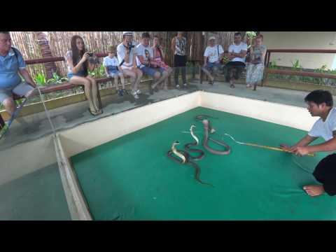 Вопрос: Как нападают змеи?