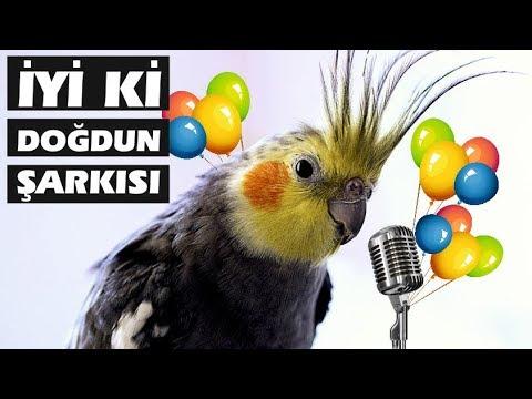 İyi ki Doğdun Şarkısını Söyleyen Kuş!