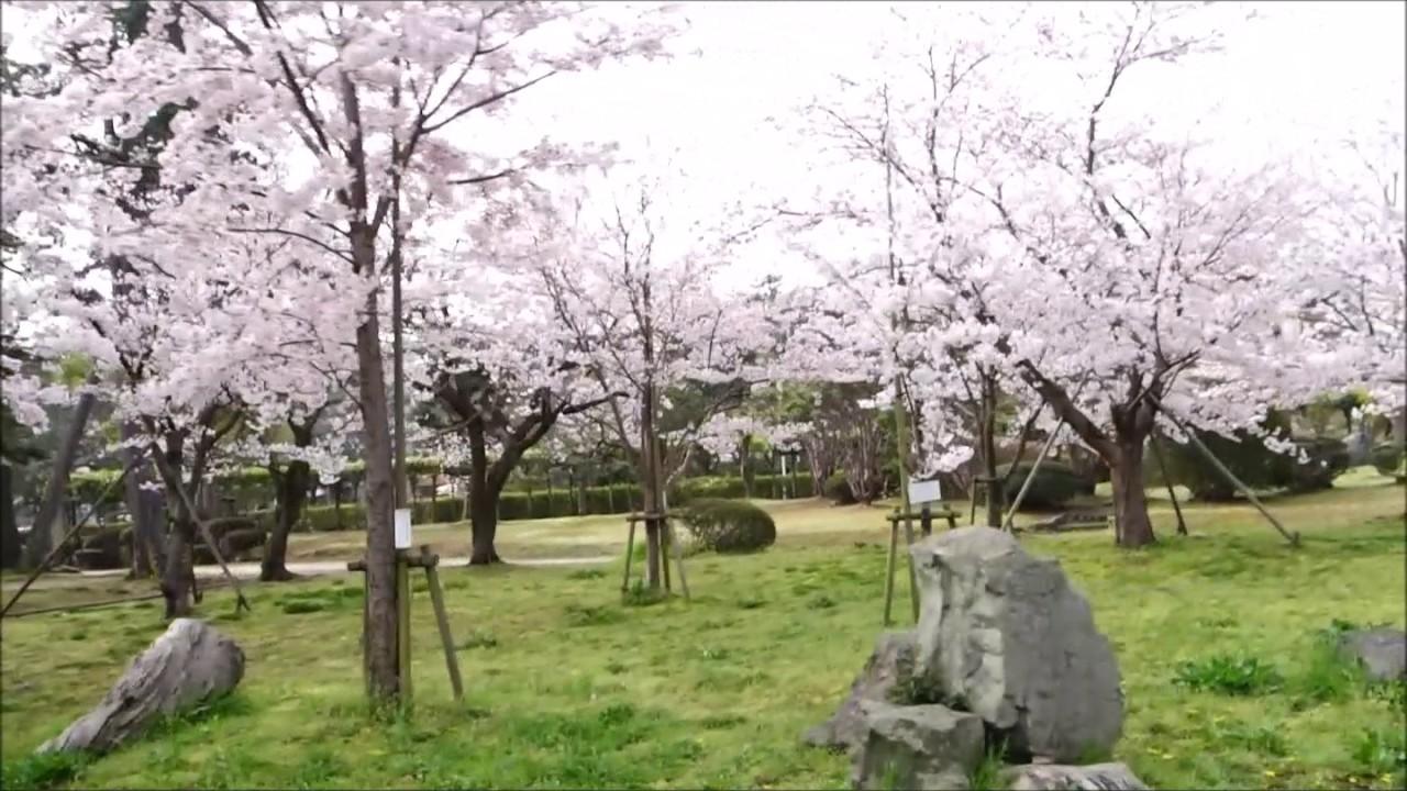 米子市湊山公園病院側から さくら満開 - YouTube