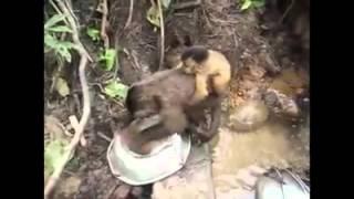 Monyet cari duit