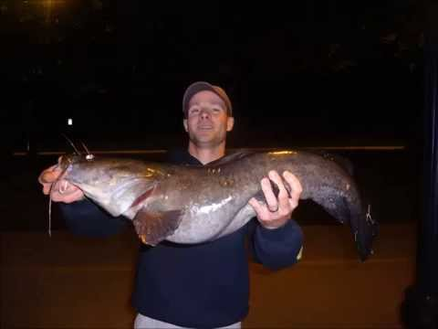 Flathead fishing in philly ft extreme philly fishing and for Extreme philly fishing