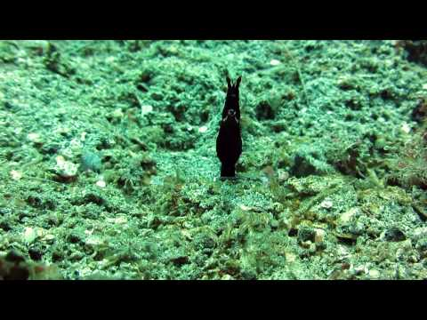 North Sulawesi Diving Impressions 2014 Bunaken Island & Lembeh Strait (Indonesia)
