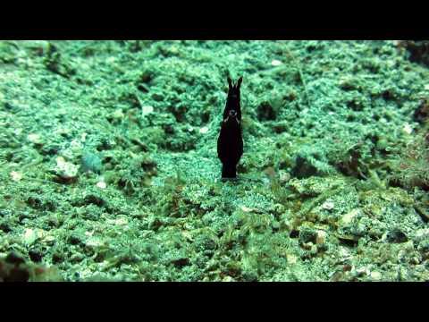 North Sulawesi Diving Impressions 2014 Bunaken Island & Lembeh Strait (Indonesia)