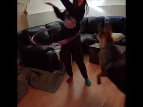 German shepherd likes to hula hoop