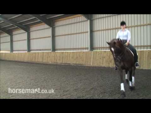 How To Ride Medium And Extended Trot In Dressage, With Daniel Timson And Anne-Marie Rawlins