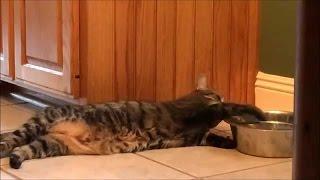 Как Ленивые Кошки пьют воду. Сборник [NEW]