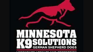 Minnesota German Shepherd Dog Breeders.wmv