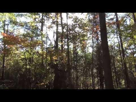 Kings Mountain NC Gateway Trail Fall Colors