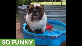 Overheated dog cools off in mini pool