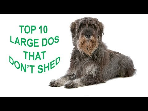 Dog breeds with pictures and price | Top 10 large dog breeds that don't shed a lot