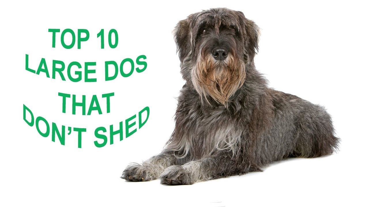 Dogs That Dont Shed A Lot