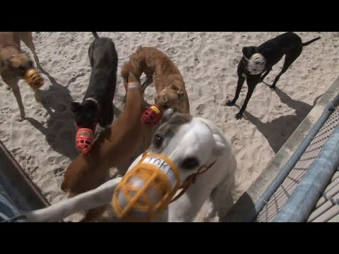Greyhound racing in Florida may be on its last legs