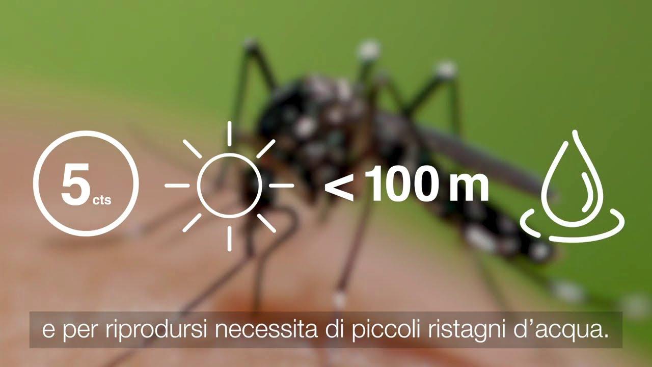 Piccole azioni che puoi fare per ridurre le zanzare nel tuo giardino