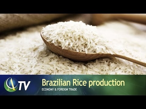 Brazilian Rice production | Economy & Foreign Trade