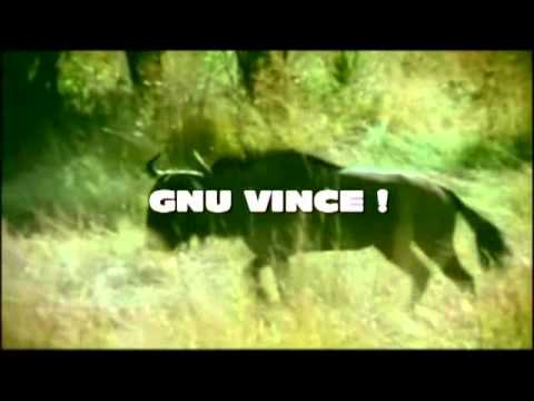 FIGHT CLUB DEGLI ANIMALI: BOVINI VS FELINI