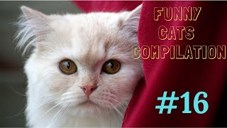 Funny cats compilation #16 /2019/