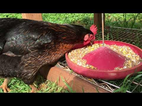 Davis Pure Planet Poultry Spray Concentrate, gallon