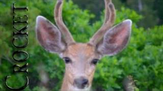 Spotting Deer