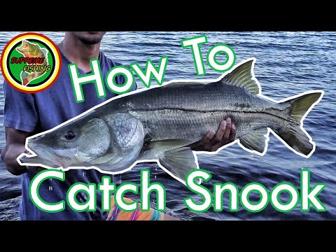 How To Catch Snook In Florida (Tackle, Tips, Locations, Techniques, And MORE!)