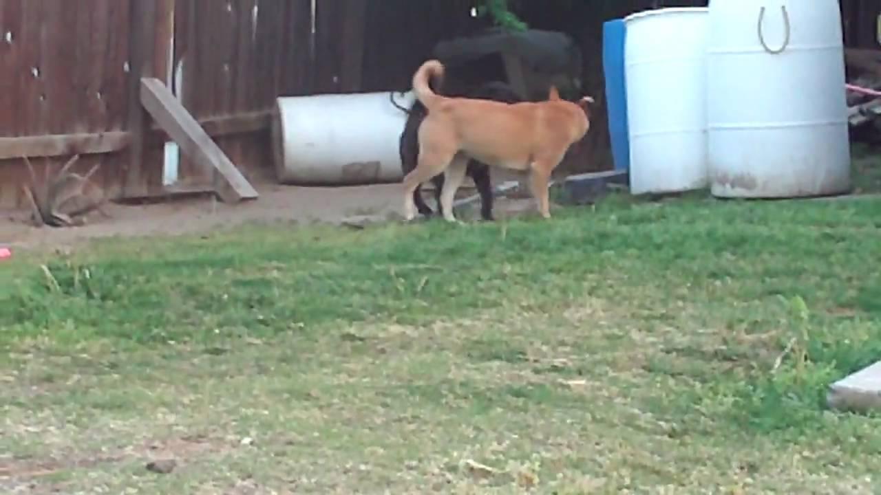 Female Dog Humping Male Dog - Youtube-7598