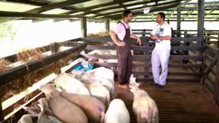 Escuela de campo: Alimentación y nutrición en ovinos - 15 de agosto