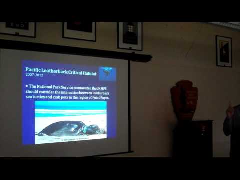 Sea Turtles of the San Francisco Bay Area - Golden Gate Brown Bag Lunch Presentation