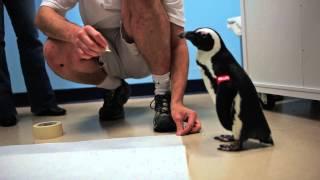 backstage penguin pass audubon aquarium of the americas
