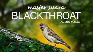 Gambar cover master suara blackthroat