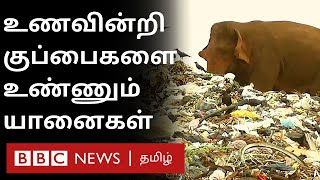 Plastic குப்பைகளை உண்ணும் யானைகள்; உணவு கிடைக்காத அவலம் | Sri Lanka | Polythene