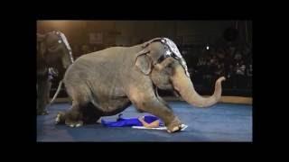 Шоу слонов братьев Гартнер