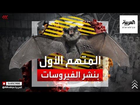 الخفاش.. المتهم الأول بنشر الفيروسات ونقلها إلى الإنسان  - نشر قبل 9 ساعة