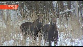 Из-за 30-градусных морозов волки подходят к домам белорусов