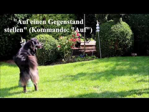 13 COOLE HUNDETRICKS
