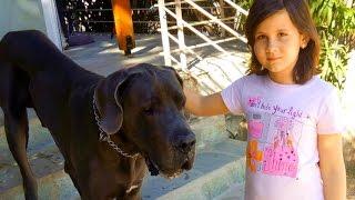 Огромная Собака лает  Лошади Ржут Huge dog barking Horses neigh