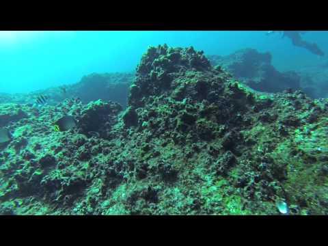 Scuba Diving - Great Basses, Sri Lanka at the dive site of  Shark Tooth Rock thumbnail
