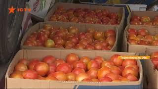 Помидорный бизнес в Украине: как вырастить хороший урожай