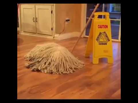 Funny Cat And Dog Compilation