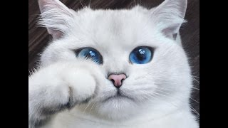 10 Of The Most Beautiful Cats In The World