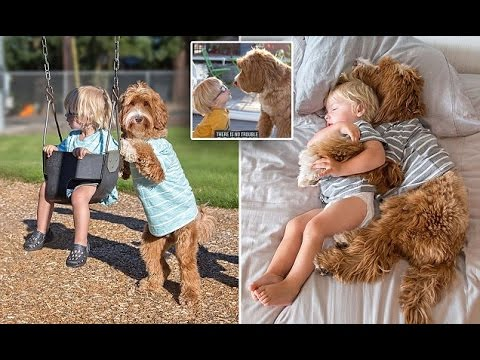 Three year old Buddy has hit it off with his foster family's dog so well that their relationship has