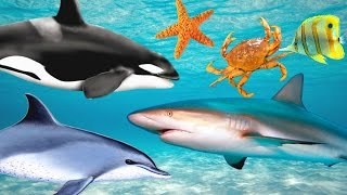 Learn Sea Animals Names and Song for Children
