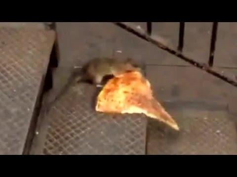 #Pizzarat becomes internet sensation