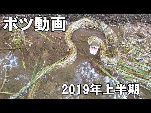 ヘビ探しボツ動画(2019年上半期)