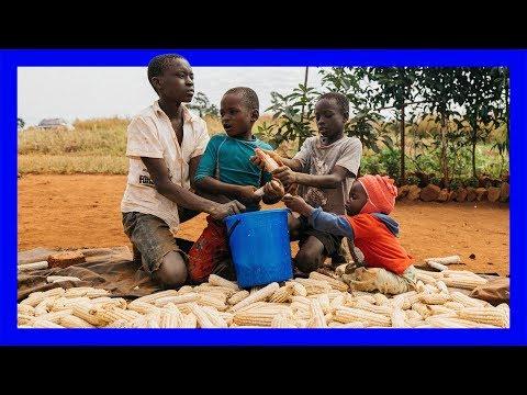 Zimbabwe: The Squatters of Hatcliffe