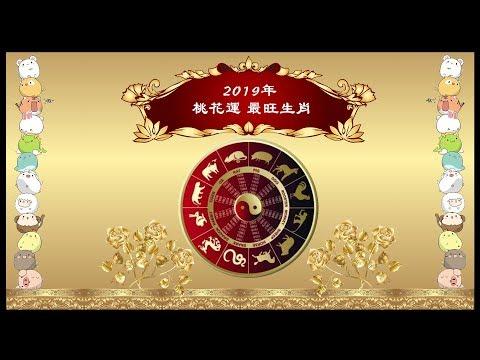 2019桃花運最旺生肖 花開遍地準備脫單