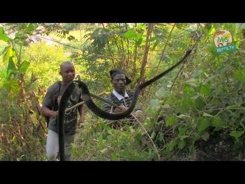 Reptil TV - Folge 54 - Cobra-Jagd in Afrika - Teil 1