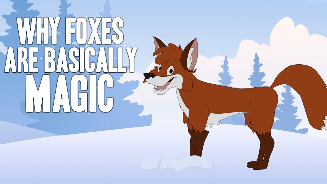 why-foxes-are-basically-magic