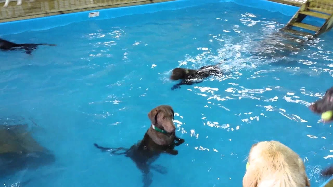 How To Get Your Dog To Swim In A Pool