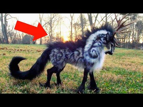Они Существуют! Невероятные Животные, Которых Открыли Недавно