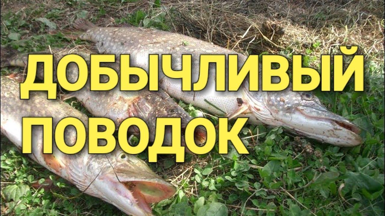 рыбалка прикормка рыбы